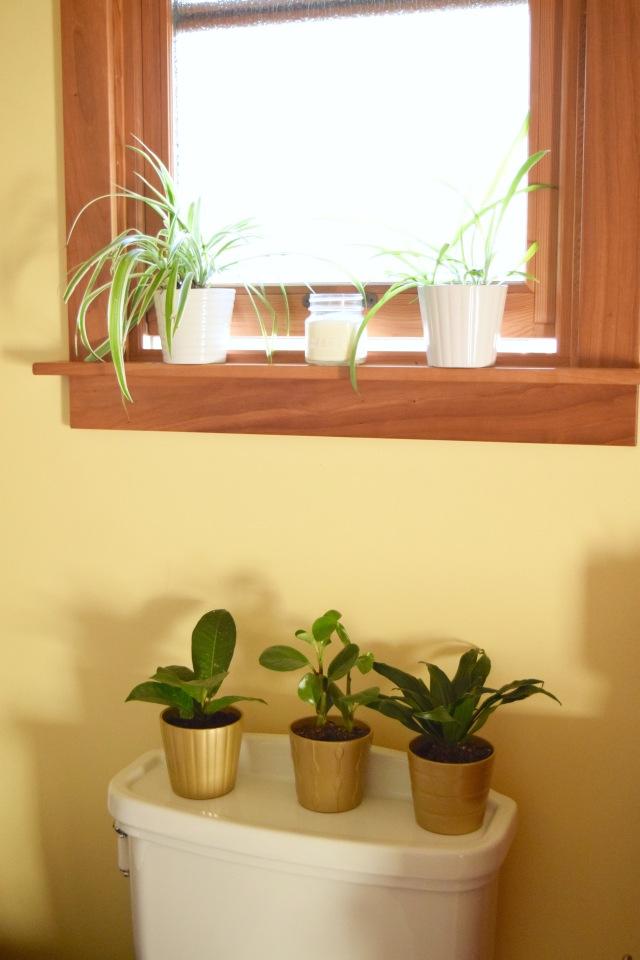Plants in the Bathroom   Land of Laurel