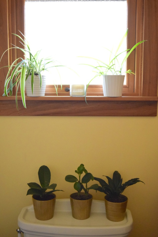 Happy Bathroom Plants   Land of Laurel