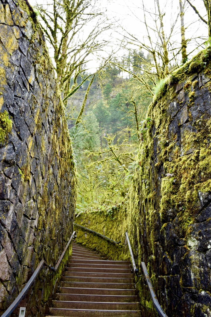 Multnomah Falls 2 | Land of Laurel
