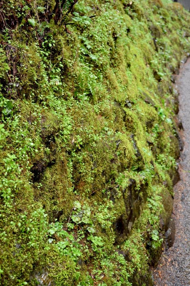 Multnomah Falls 3 | Land of Laurel