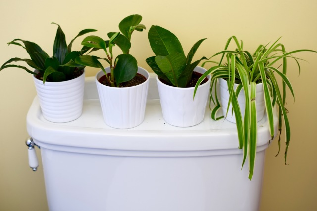 Mini-Bathroom Jungle | Land of Laurel