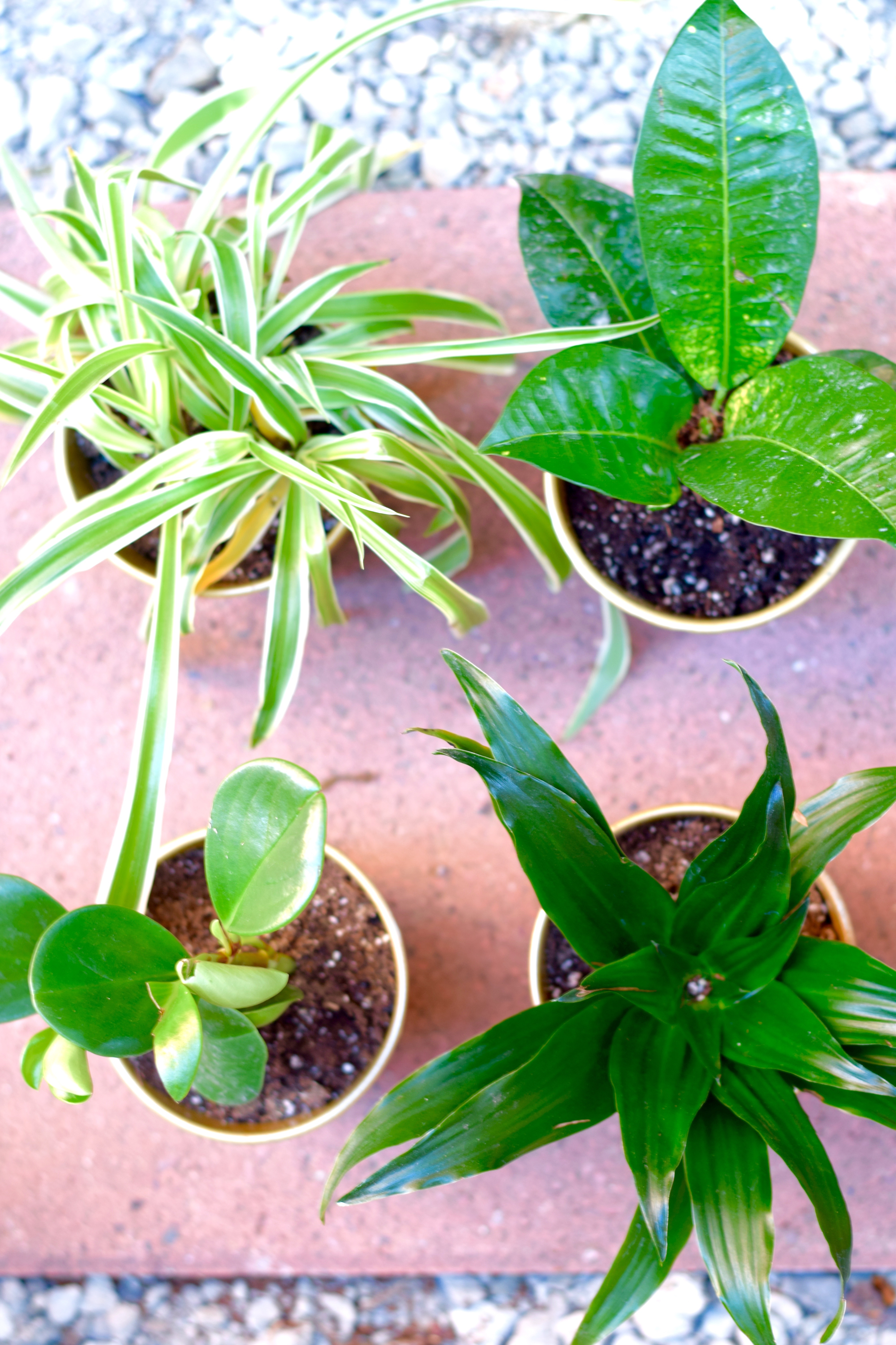 Plants Potted Gold | Land of Laurel