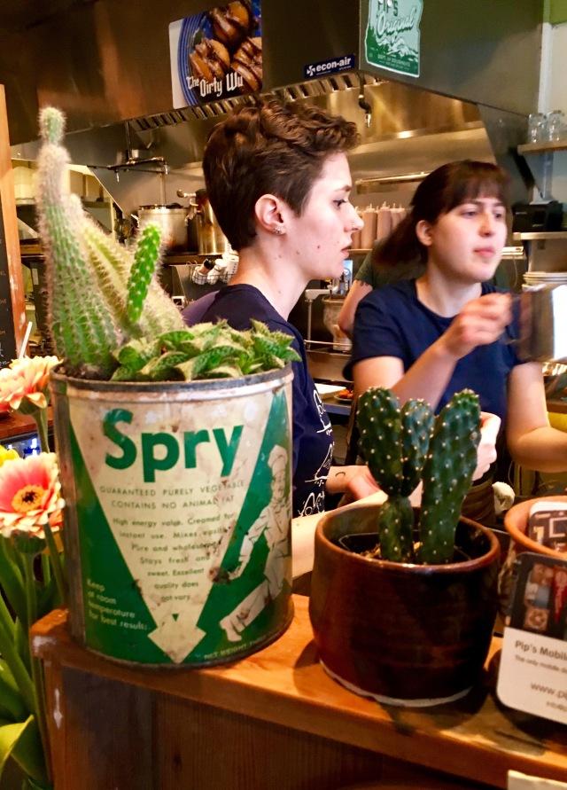 Succulent Cans | Land of Laurel