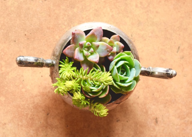 Sterling Silver Sugar Bowl Mini-Succulent Planter | Land of Laurel