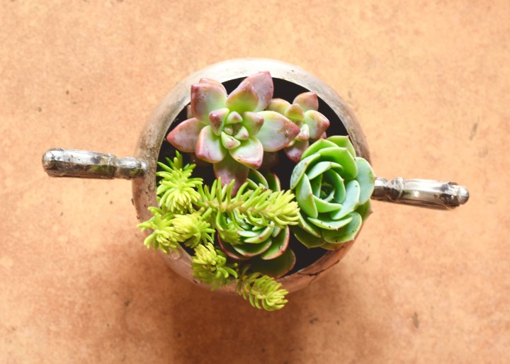 Sterling Silver Sugar Bowl Mini-Succulent Planter | Land of Laurel