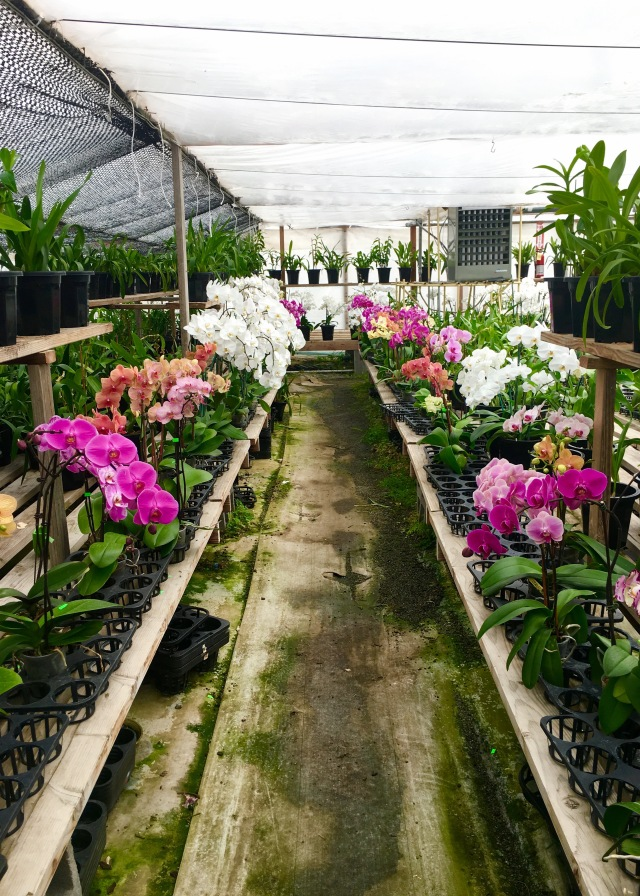 Orchids to Die For | Land of Laurel