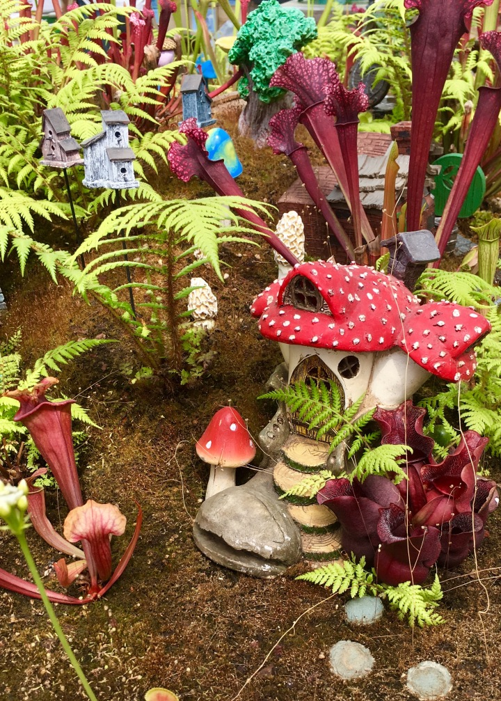 Carnivorous Plants & Fairy Houses | Land of Laurel