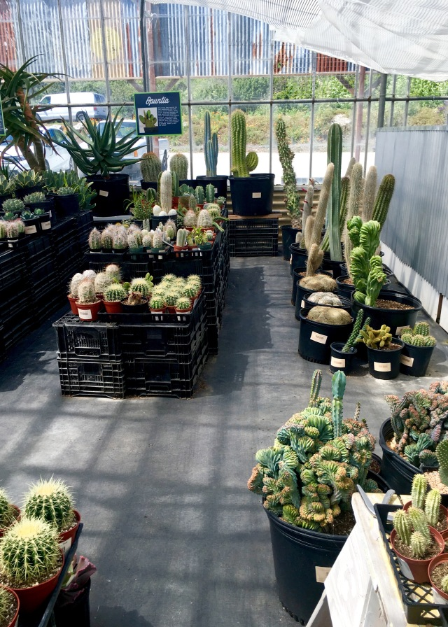 Cacti & Succulent Nursery | Land of Laurel