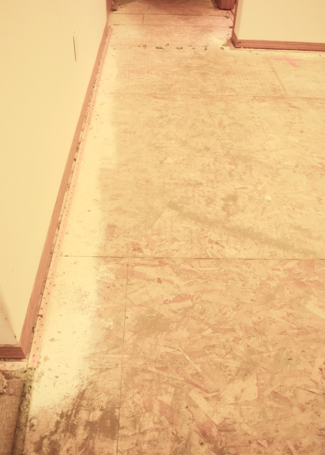 Dust Under Carpet   Land of Laurel